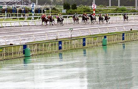 競馬 ダート 雨