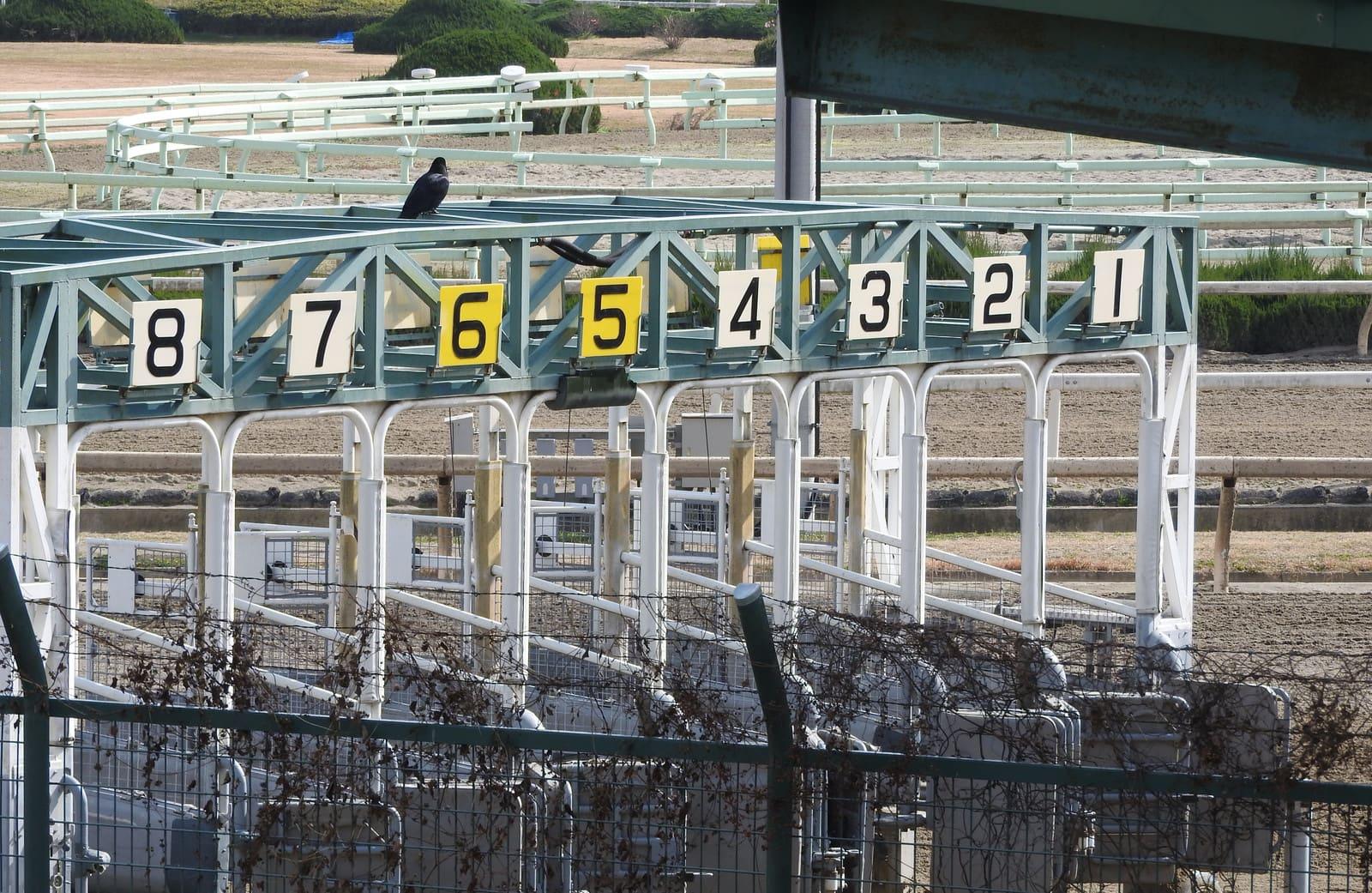 ゲート 鳥