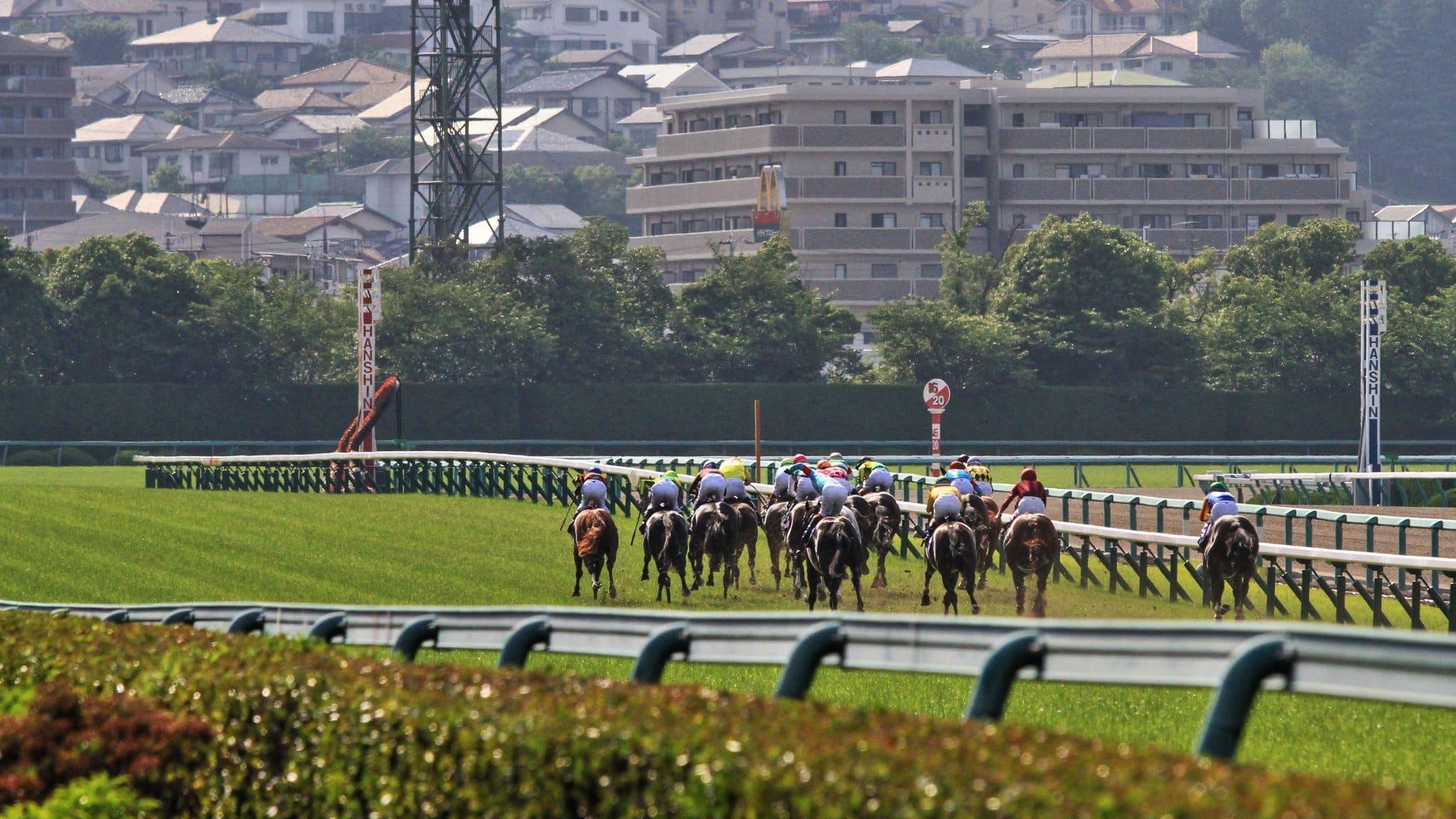 阪神競馬 レース