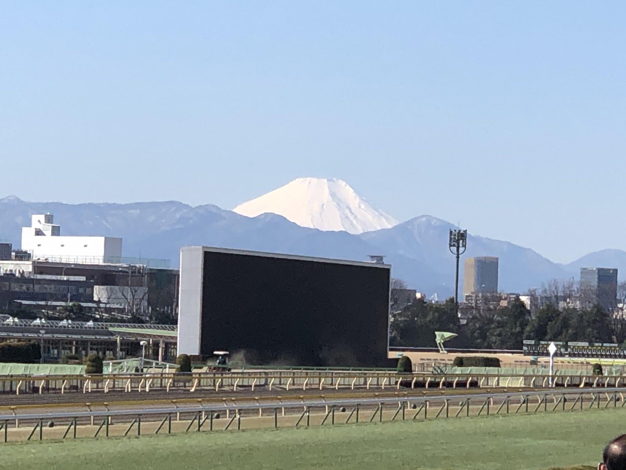 東京競馬場 ターフビジョン