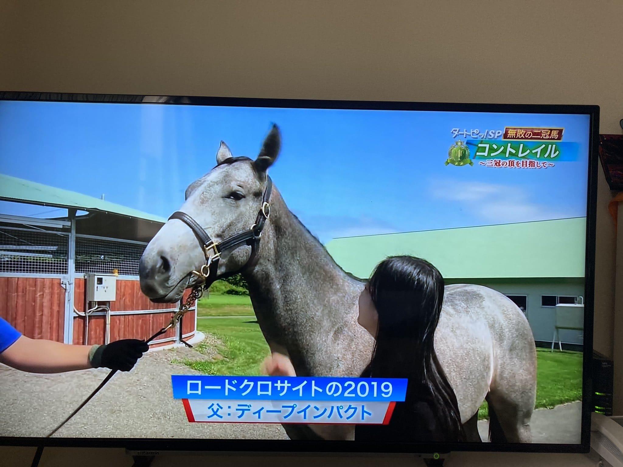 ディープインパクト 仔馬