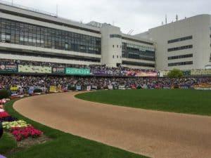 京都競馬 パドック