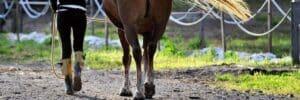 競馬予想サイトで穴馬の提供のある情報を使う