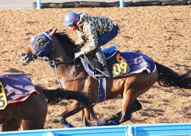 2021年弥生賞の注目馬2頭目シュネルマイスター