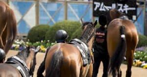 2021年天皇賞秋の予想と展望!グランアレグリアが牝馬6頭目の盾の女王に