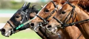 競馬において、血統を知れば初心者の競馬は変わる!